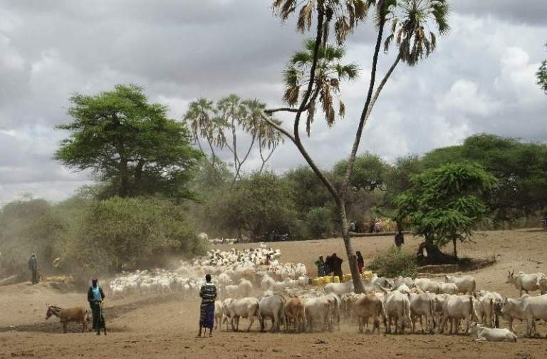 Research and Partnerships Pastoralists Image 01